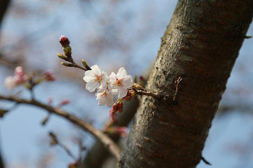 Wood, Nature, Quarter, Outdoors, Flowers