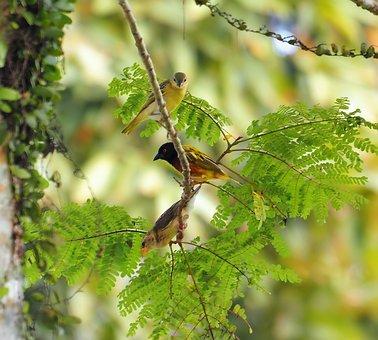 Nature, Wildlife, Bird, Animal, Leaf, Outdoors, Wild