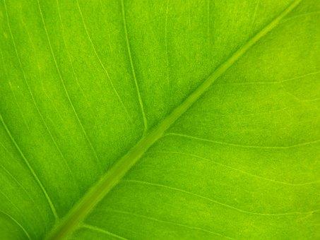 Background, Texture, Vegetable, Green, Leaf