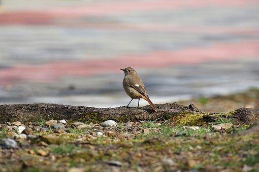 Animal, Park, Moss, Bird, Wild Birds