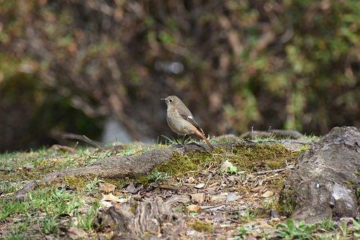 Animal, Grass, Rock, Moss, Bird, Wild Birds