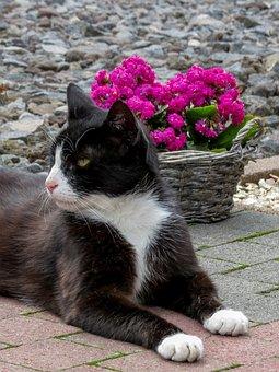 Cat, Black White, Beautiful, White Mask, Pride, Lying