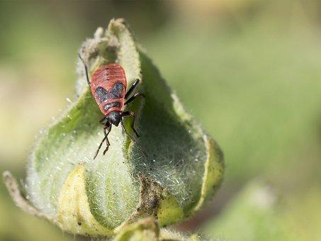 Fire Bug, Nature, Close, Color, Background