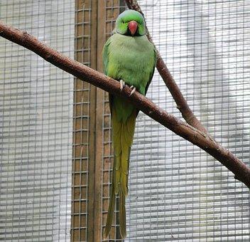Bird, Parrot, Parakeet, Wildlife, Feather, Tropical