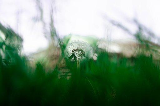 Nature, Grass, Plant, Growth, Field, Fresh, Dawn