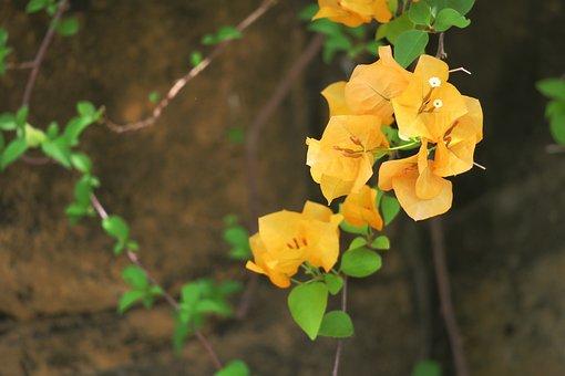 Plant, Nature, Leaf, Flower, Garden, Flower's, Outdoor