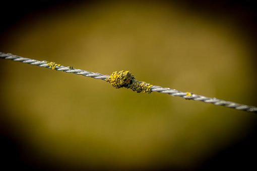 Nature, Barbed Wire, Dawn, Focus, Light