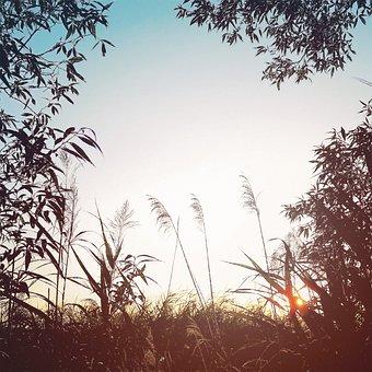 Tree, Nature, Landscape, Plant, Sky, Summer