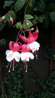 Nature, Flower, Flora, Garden, Leaf, Season, Tree