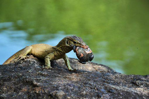 Nature, Reptile, Animal World, Animal, Lizard, Death