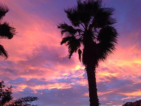 Sunset, Tree, Sun, Palm, Nature, Tropical, Summer