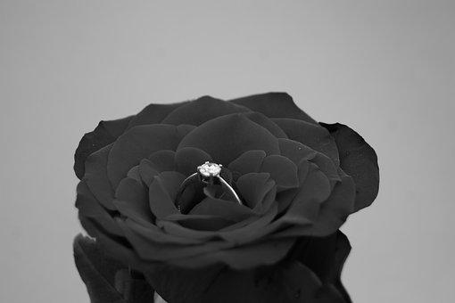 No One, Nature, Black And White, Rose, Engagement, Ring