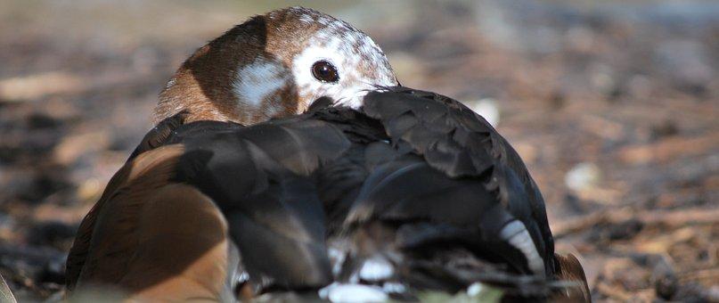 Bird, Wildlife, Nature, Animal, Outdoors, Feather, Wing