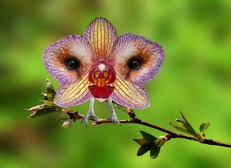 Digiart, Photoshop Art, Nature, Orchid, Owl, Eulchidee