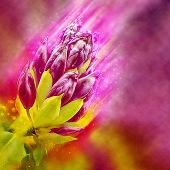 Rhododendron, Flower, Bud, Background Image, Pink