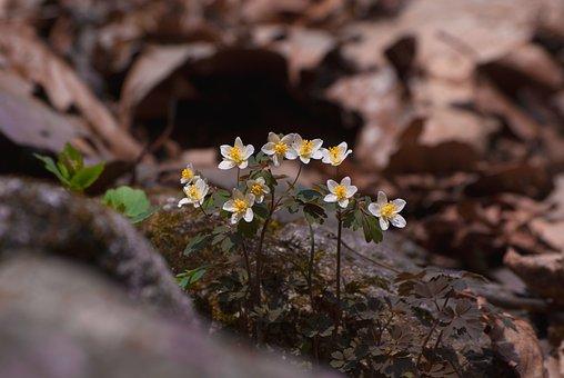 Nature, Plants, Flowers, Wildflower