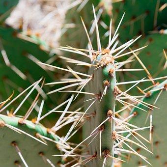 Cactus, Spine, Sharp, Prickly, Succulent