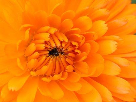Flower, Nature, Summer, Flora, Color, Yellow, Heart