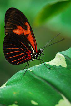 Butterfly, Insect, Nature, Wing, Leaf, Probe