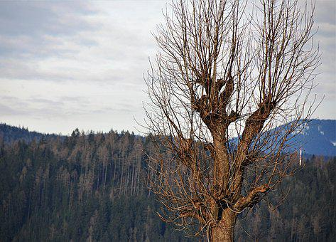 Tree, Kahl, Wood, Nature