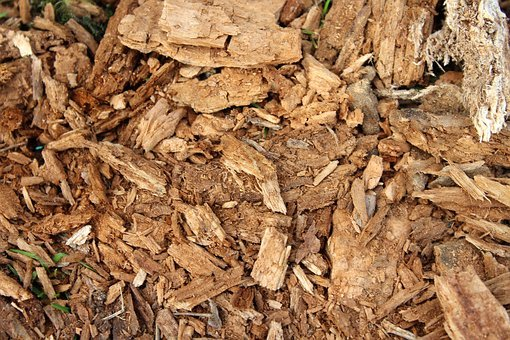 Dry, Batch, Nature, Wood, Rotten, Tree, Texture