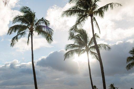 Palm, Tropical, Beach, Coconut, Seashore