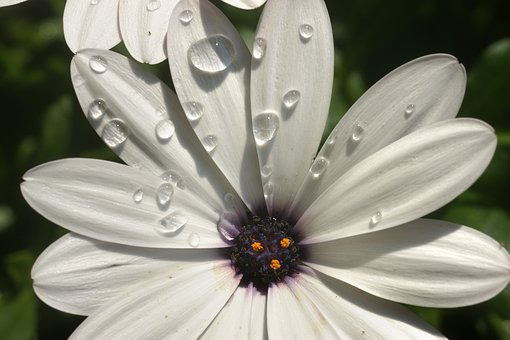 Flower, Water Drops, Dew, Nature, Flora, Summer, Garden