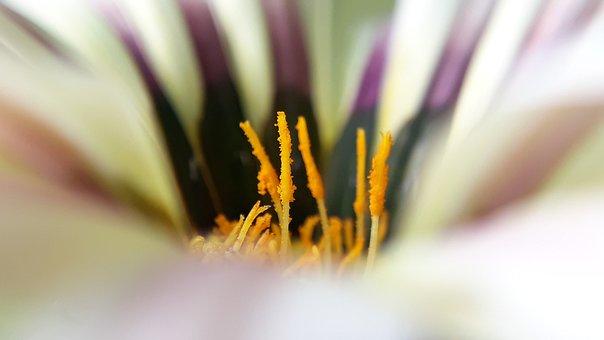 Flora, Nature, Flower, Garden, Summer, Color, Closeup