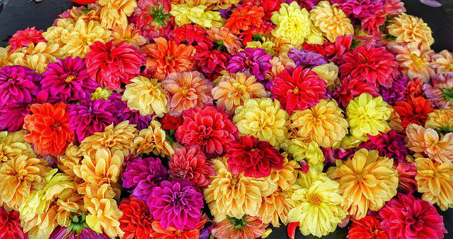 Indian, Marketplace, Flower, Heads, Scented, Sale