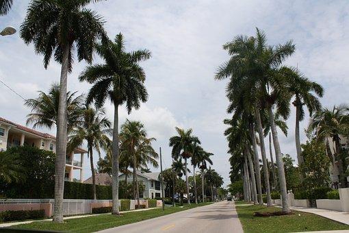 Palm, Tree, Travel, Hotel, Vacation, Luxury, Sky, Beach