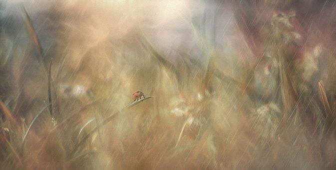 Background, Texture, Rain, Meadow, Dream, Ladybug
