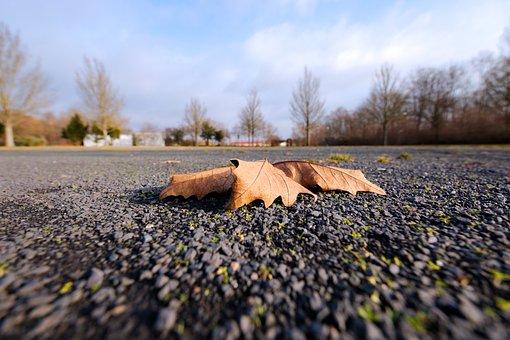 Nature, Season, Autumn, Sky, Winter, Landscape