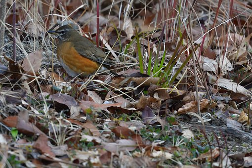 Natural, Outdoors, Wild Animals, Wood, Bird
