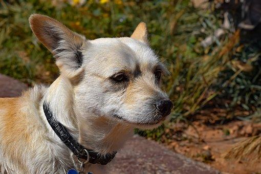 Dog, Animal, Canine, Cute, Mammal, Portrait, Pet