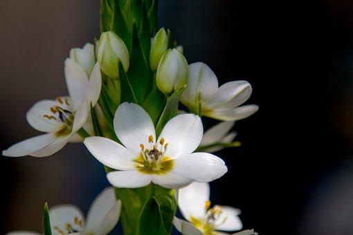 Flower, Nature, Plant, Leaf, Garden, Easter, Season