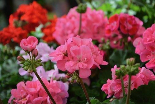 Flower, Plant, Garden, Nature, Petal, Floral