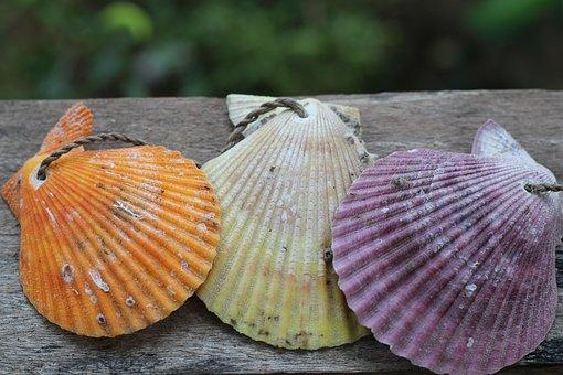 Nature, Summer, Shell, Tropical, Shellfish, Scallop