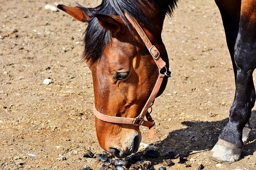 Horse, Stallion, Horse Head, Brown, Ride, Mare, Head