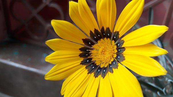 Nature, Flower, Flora, Summer, Garden, Bright