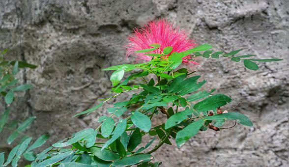 Red, Penda, Tree, Nature, Flora, Leaf, Flower, Summer