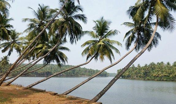 Palm, Tropical, Tree, Beach, Nature