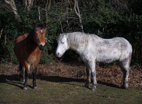 Mammal, Farm, Cavalry, Pasture, Animal, Pony, Horse