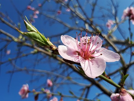 Flower, Branch, Tree, Plant, Nature, Season, Bud
