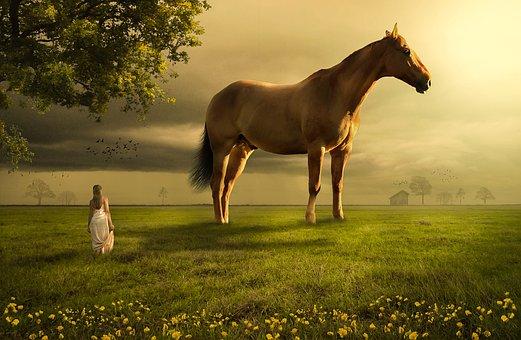 Horse, Field, Meadow, Grass, Farmland, Mammal, Woman