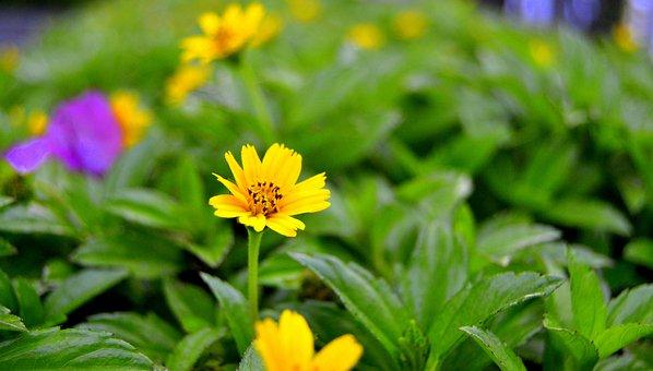 Nature, Leaf, Flora, Summer, Flower, Garden, Bright