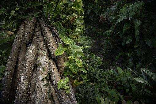 Nature, Leaf, Tree, Flora, Growth, Tree Roots