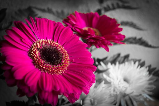 Nature, Flower, Plant, Nice, Color, Selective Color
