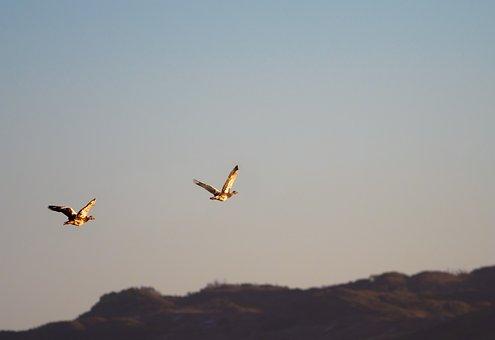 Landscape, Flying, Birds, Sky, Fly, Flight, Geese, Blue