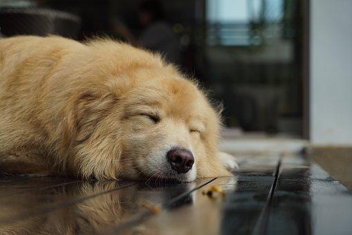 Dog, Canine, Mammal, Pet, Portrait, Animal, Cute, Fur
