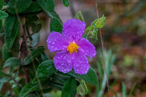 Nature, Flower, Plant, Leaf, Garden, Violet, Mountain